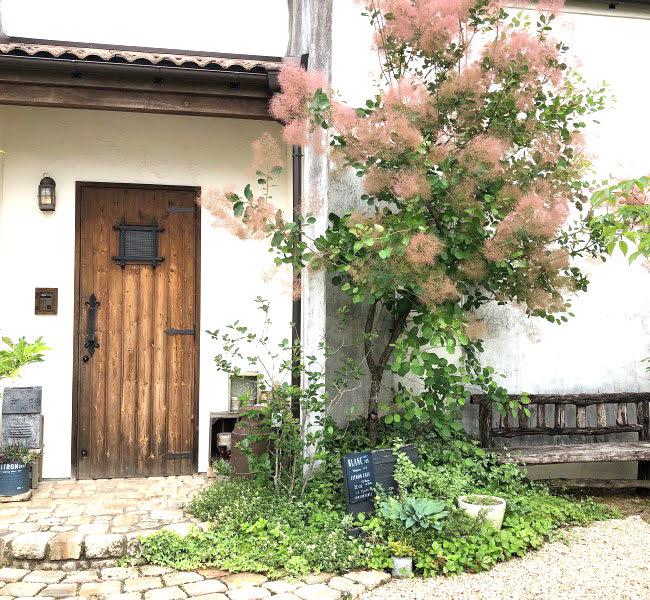スモークツリーのある庭の画像