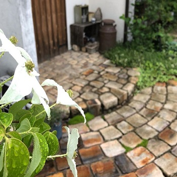 ハナミズキの花の画像