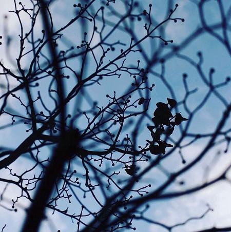落葉樹のイメージ画像