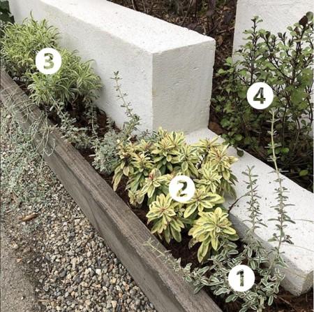 斑入り植物の画像