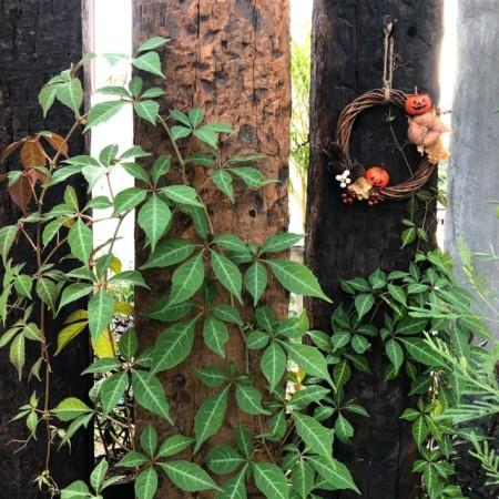 ハロウィンリースを庭に飾った画像