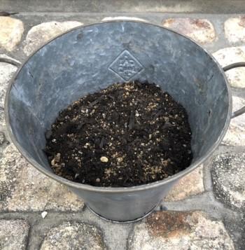 鉢の半分まで土を入れた画像