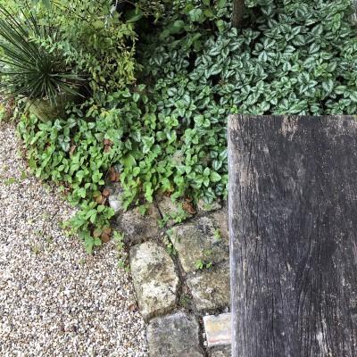 我が家のグランドカバーのラミウム・ガレオブドロンの画像