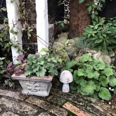 我が家のヒューケラの寄せ植えと地植えの画像