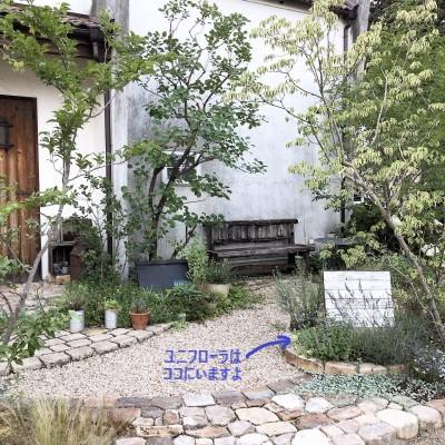 シレネユニフローラの庭での画像