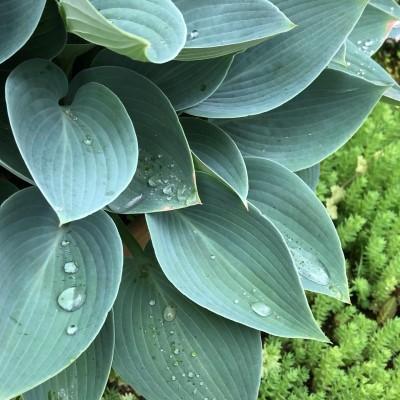 梅雨のイメージの葉の画像