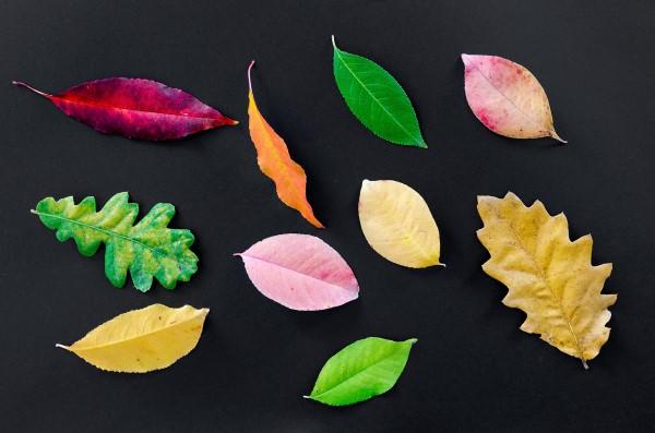 葉が黄色くなった画像