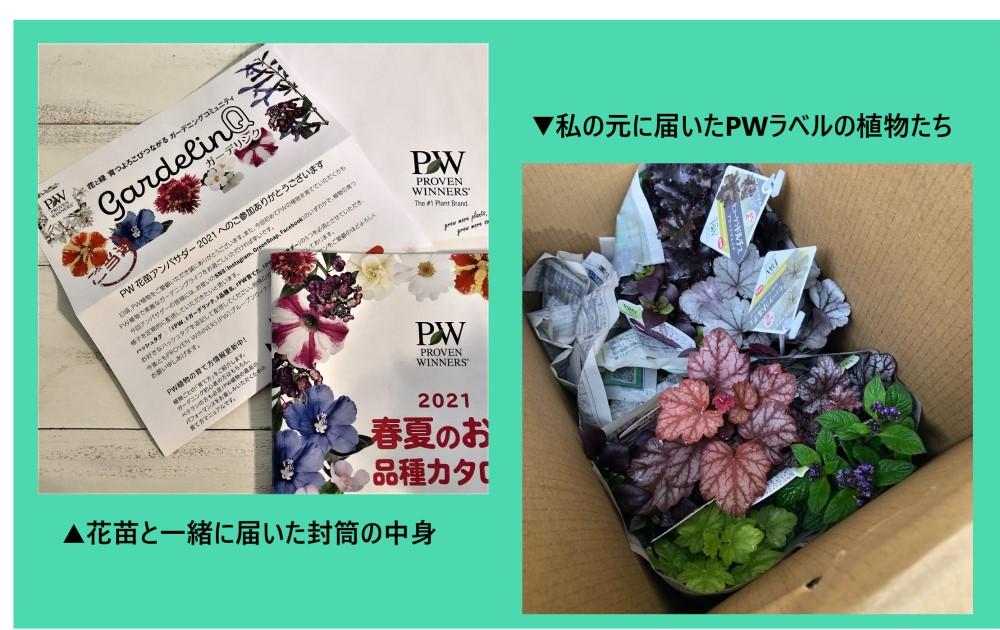 届いたPWブランドの苗の画像