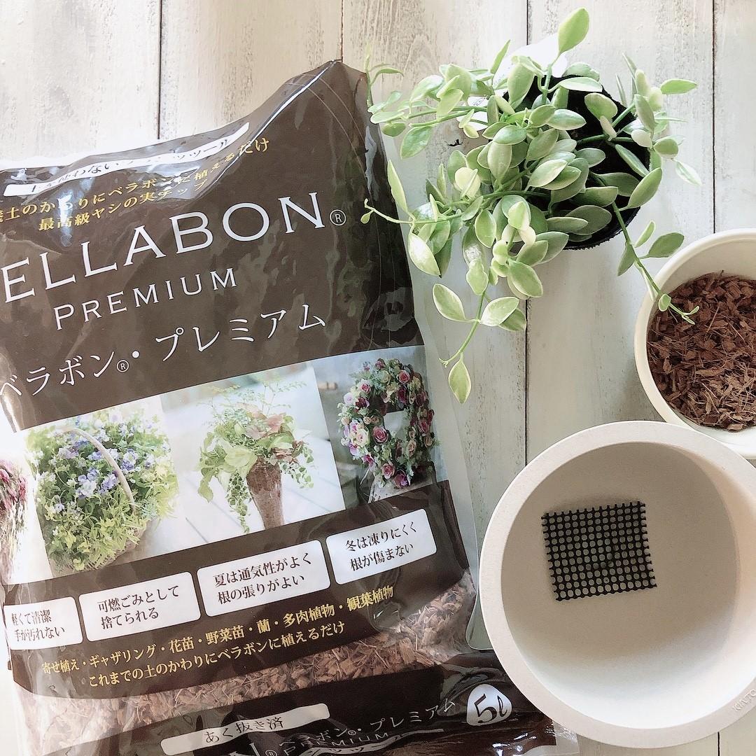 ベラボンを植え替える予期の準備の画像